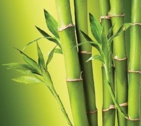 bamboo extract for skin